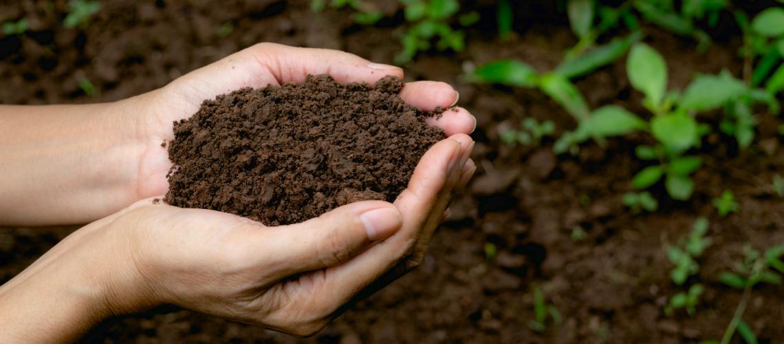 blog 9 - sustainability